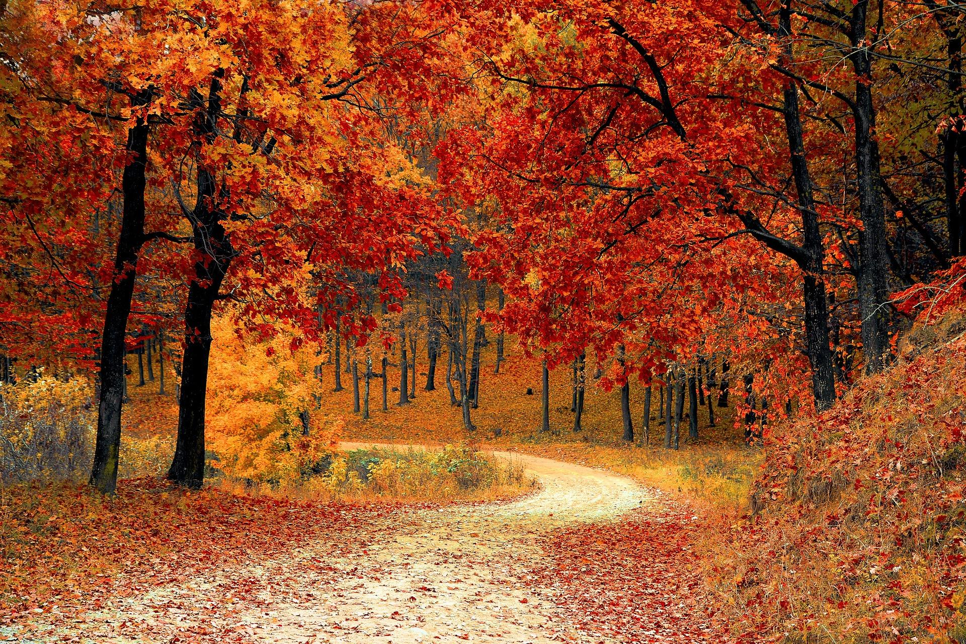 Where to Find Fall Foliage in Kentucky