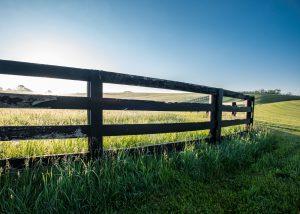 Fence green grass