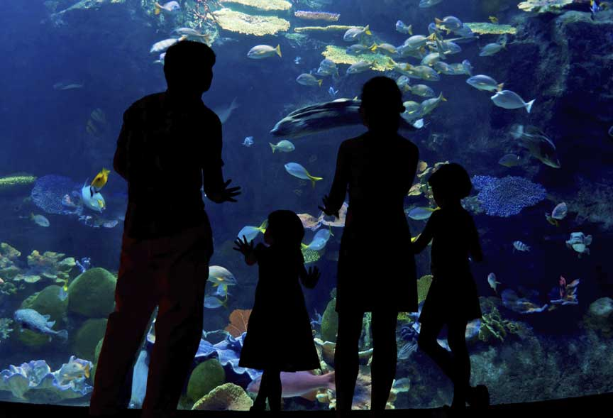 AQUARIUM WITH FAMILY  WATCHING